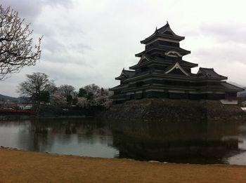 matsumotosakura22.jpg